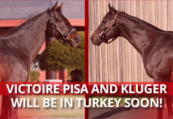 VICTOIRE PISA and KLUGER will be in Turkey Soon!
