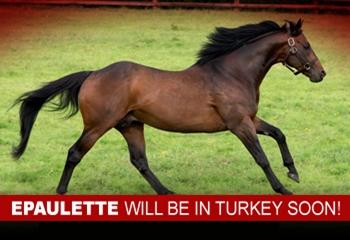 EPAULETTE is Coming to Turkey Soon!