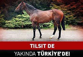 TILSIT de yakında Türkiye'de!